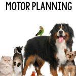 Pet Gross Motor Planning Ideas